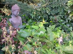 Padmaloka Buddha in leaves