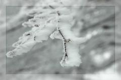 Frozen Wind (Web Orange) Tags: trees winter white snow macro ice leaves foglie alberi landscape seasons nikond70 branches inverno paesaggio umbria rami ghiaccio cens montecucco costacciaro golddragon marcophotos piandellemacinare scidafondo