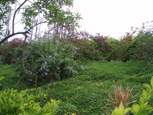 Garden Area Near House