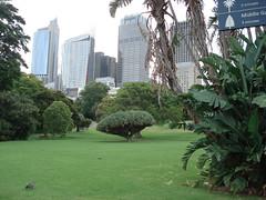 botanical gardens tree (Jannygirl) Tags: tree buildings sydney ducks australia topheavy dragonbloodtree