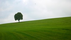 """The Tree - 2nd Edition"" (helmet13) Tags: tree green nature landscape silence harmony simplicity grassland inspire singletree gettyimages aoi 100faves leicadlux3 freienatur world100f phvalue"