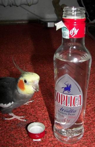 Hicks! (Bitte nicht mit Euren Tieren nachmachen!)©Simczuk/flickr.com