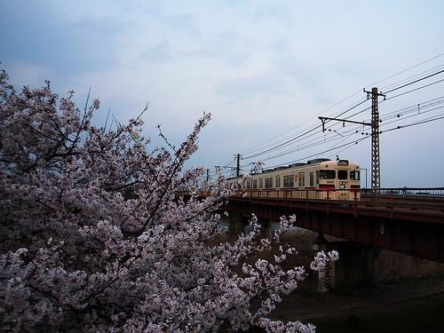ローカル線と桜