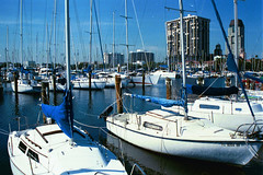 SOUL OF A SAILOR (MIKECNY) Tags: water sailboat marina stpetersburg boat florida song kennychesney
