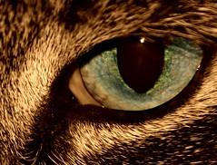 Tigger Eye Sepia (Blackcatatheart) Tags: