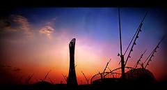 { تعلم من غروب الشمس وش معنى الوداع  *~ (» GUM «) Tags: city pink blue sunset red sky orange black tower sports silhouette yellow clouds photoshop canon gum macintosh landscape asian cs2 january games 2006 powershot flame adobe 24 olympic 2008 s80 doha qatar aspire غروب خليفة قطر الدوحة سماء استاد khalifastadium غيم اسود اصفر ازرق احمر كانون سما شعلة aplusphoto آسياد