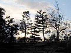 Kyoto: trees at Nijo Palace (Electric Goose) Tags: japan kyoto nijo