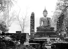 Lonely buddha