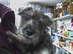 Puppy at Booth's Corner (Dave_McGurgan) Tags: cute puppy boothscorner