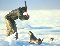 is he a human being?he kill a baby seal.and he names himselfs sportsman