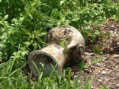 Garden Urn (Roben-Marie) Tags: old urn garden ground