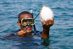 Free diving, Free Fishing (-Passenger-) Tags: ocean santa sea snorkel dof native bokeh atlantic cruz freediving fisher caribbean diver fugu apnea islote balloonfish pezglobo catchandrelease cruzadas