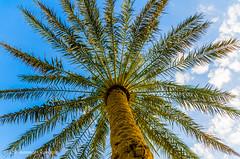 The Palm Tree (Mohammed Qamheya) Tags: d7000 nikon sigma1750mmf28os doha qatar