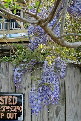 Spring In Mena 24