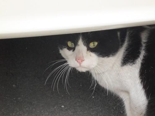 Today's Cat@2010-04-12