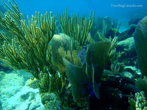 Underwater world - Belize Barrier Reef