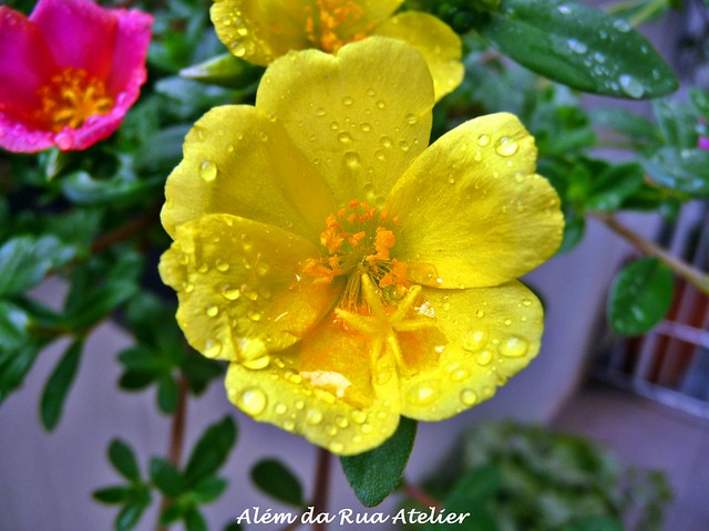 flor amarela / yellow flower
