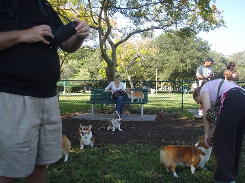 One corgi sits on the bench