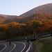 Fall Leaves on Akagi 1