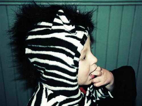 zebra-acidic
