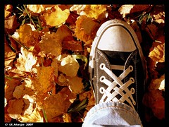 Freestyle Converse (ul_Marga) Tags: autumn fall feet foglie freestyle shoes jeans converse autunno allstar piede scarpe 2007 pantaloni stringhe coloriautunnali ulmarga