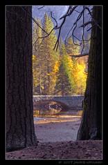 Fall Colors Thru The Pines (Mellard) Tags: california bridge fall water landscape scenic yosemite hdr 5xp mellard