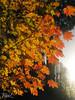 November's Palette