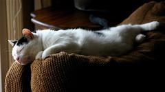 (mightyquinninwky) Tags: sweety cat cute catnap nap sunlight couch coucharm livingroom morganfieldkentucky unioncountykentucky westernkentucky kentucky thebluegrassstate rural smalltown fuzzy sleepy stretchedout comfy cushy cushion onblack onwhite viewonblack viewonwhite canoneosdigitalrebel geo:lat=37693236 geo:lon=87905452 geotagged