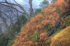 Grass Slope and Man-made Snake (kurokojpn) Tags: japan tokyo countryside orlando chiba   hdr kuroko canon40d photosjapan kurokoshiroko kuroko01 kurokoshiroko photographytokyo photostokyo bestoftokyo tokyobest orlandojpn thetokyopost kurokojpn