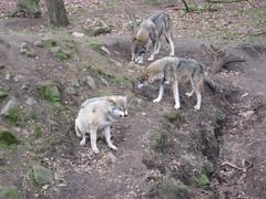 IMG_2012 [1024x768].JPG (yerseypijpelink) Tags: rhenen ouwehands dierentuin yersey