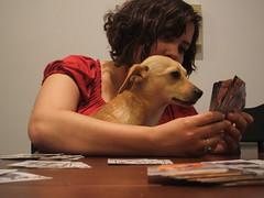 card shark (petit hiboux) Tags: krissa nano playingcards
