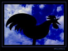 too lazy to call the day (PILANA) Tags: sky abstract black art animal nice photos olympus olympusc5060 c5060 pilana renatomajeti olympusc5060widezoom