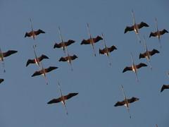 Guarda lassù (Stranju) Tags: sardegna italia cagliari calamosca fenicotteri fenicottterirosa