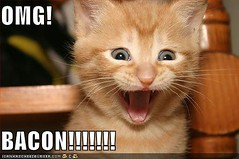 funny-pictures-kitten-is-excited-about-bacon