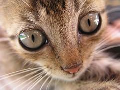 Kitten II (TRIPWOLF) Tags: travel tourism latinamerica animal cat island kitten nicaragua animalplanet centralamerica ometepe bej bestofcats aplusphoto mrtraveller pet100 tripwolf bestflickrphotography boc0808 petsaroundtheworld