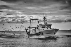 Return fishing trawler (davcsl) Tags: blackwhite bw biancoenero davcsl europe france gard languedocroussillon landscape monochrome monotones noiretblancblackwhite nb noiretblanc occitanie southoffrance water grauduroi blackdiamond