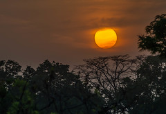 African Sunset 2 (blue5011b) Tags: africa jungle sunset sun orange clouds landscape nikon d700