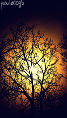 In The Search For The Last Light  (yusuf_alioglu) Tags: world wood light shadow red sky orange sun sunlight tree bird colors birds yellow last forest turkey garden dark photography solar photo wooden search flickr colours peace photographer shadows earth timber theend planet orangesky columbine 2008 treebranches 2009 soe picnik fantasticplanet lastlight darksky darkforest gkyz ku aa glge walnuttree tokat supershot fantasticsky lastsunlight darktree birdsinthetrees dovebird freeearth picasa3 darkplanet panasonicdmcls80 yusufaliolu yusufalioglu tokatcity unbornart inthesearchforthelastlight treesinthelightofincreased mysterybehindthetree