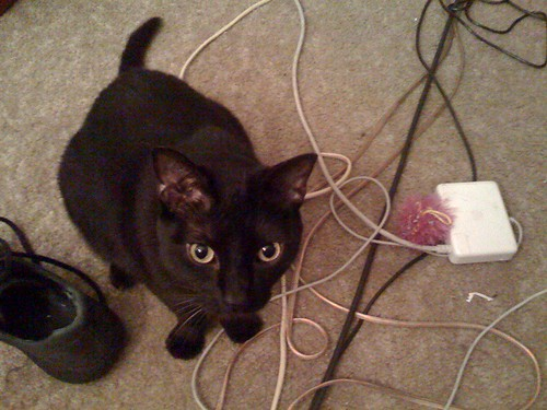 2018 Cat, Macbook Power Adapter, Shoe