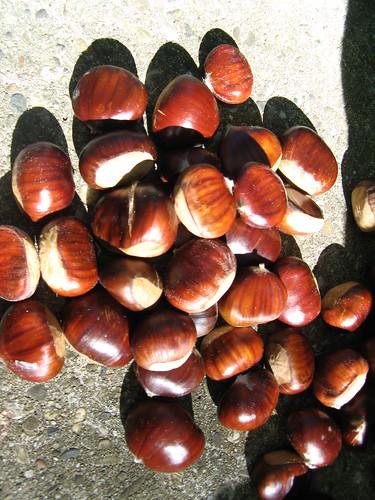 Privas Chestnuts 023