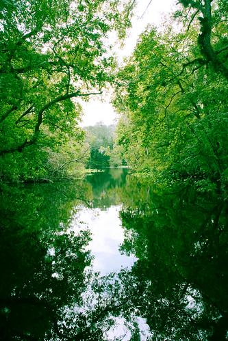 Wekiva River Trip