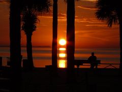 Another View (priscilla.starling) Tags: trees light sunset red sky orange sun reflection beach nature water yellow set dark palms relax gold evening waiting day glow gulf view bright photos oneofakind watch relaxing orb scene palm reflected palmtrees sillouette serene experimentation setting shining bestofflickr beautifulsunset waterwatereverywhere sunsetcolors newportrichey floridasunset wetreflections beautifulworld beautifulsunsets floridasunsets beautifulcapture amazingsunsets sunsetshots anawesomeshot panasoniclumixdmcfz50 panasonicfzseries greenkeybeach ithinkthisisart diamondclassphotographer flickrdiamond ilovemypic freenature perfectsunsetssunrisesandskys naturessilhouettes zenenlightenment priscillastarling yourpreferredpicture panasoniclumixusers solofotos skiescloudsandsun landscapesdreams inspirationfromtheimagination artisticintegrity sepctacularvisions flaphotos floridapublicbeachesgardensandparks sacredmaner