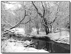 Winter Creek (Lisa-S) Tags: winter blackandwhite bw white snow ontario canada reflection tree home water landscape lisas explore allrightsreserved brampton themoulinrouge naturesfinest i500 6048 interestingness463 platinumphoto flickrplatinum thegardenofzen copyrightlisastokes