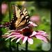 fluttering...