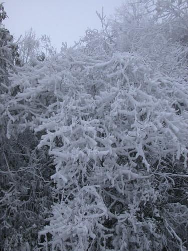 ice_trees_2