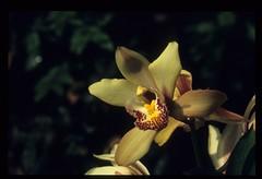 bloemen-045 (Cor Draijer) Tags: bloemen roosendaal mijndert