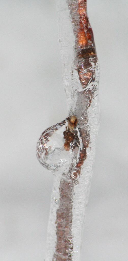 ice (10)