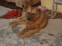Scott the Dog (MissKW) Tags: honduras