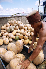 JPBR-1493-11-B World Bank (World Bank Photo Collection) Tags: brazil food latinamerica vegetables amazon markets vegetable squash worker worldbank unload