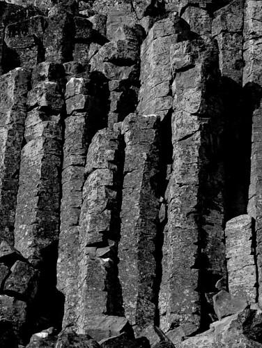 photo of columnar cactus of az